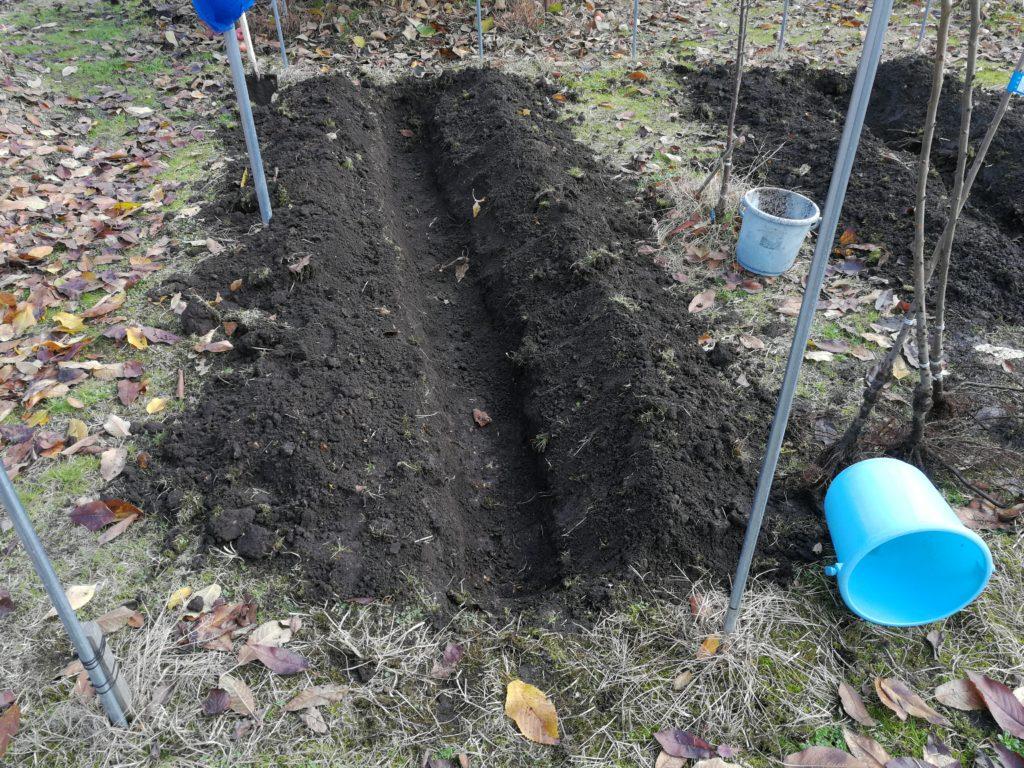 穴掘り完了