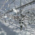 畑 大雪20210102 1