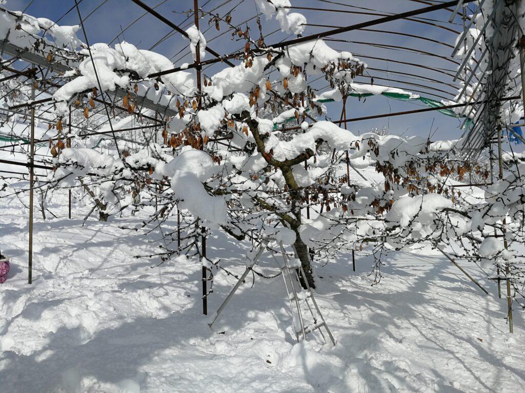 畑 大雪20210102 2